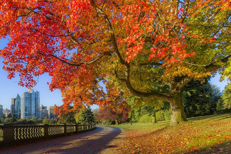 Outono em Vancouver