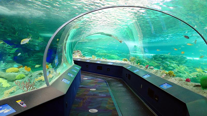 Dangerous Lagoon no Ripley's Aquarium of Canada