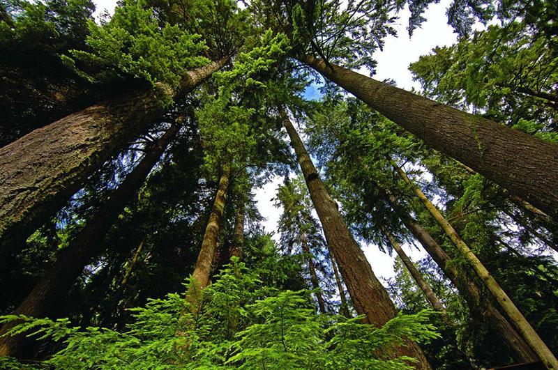 Trilhas de floresta no Pacific Spirit Regional Park em Vancouver