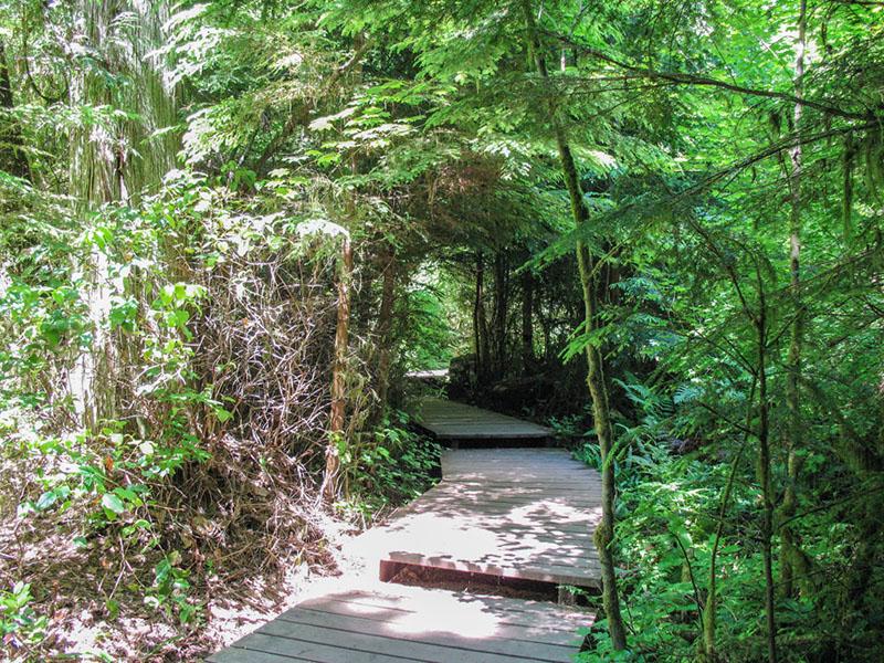 Trilhas curtas do Pacific Spirit Regional Park em Vancouver