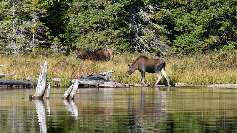 Passeio pelo Algonquin Provincial Park em Toronto