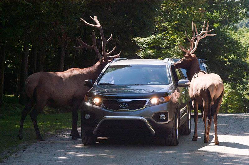 Proximidade com animais no Parc Oméga em Montreal
