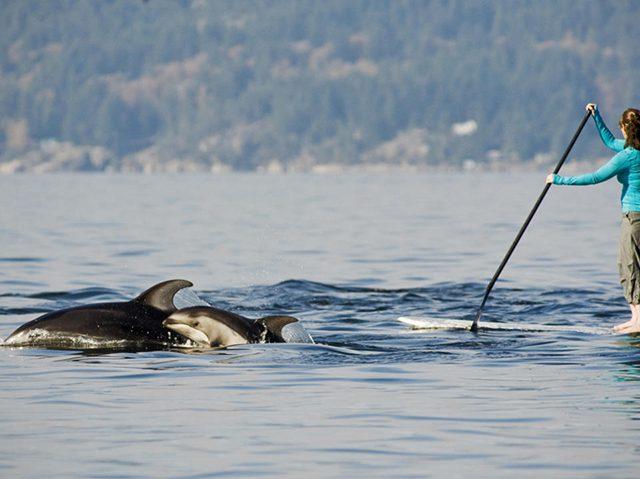 Passeio de Stand Up Paddle em Vancouver