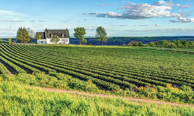 Vinhedo Saint Pierre Le Vignoble em Quebec