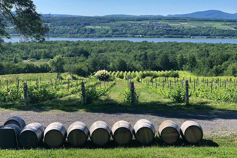 Vista dos vinhedos em Quebec