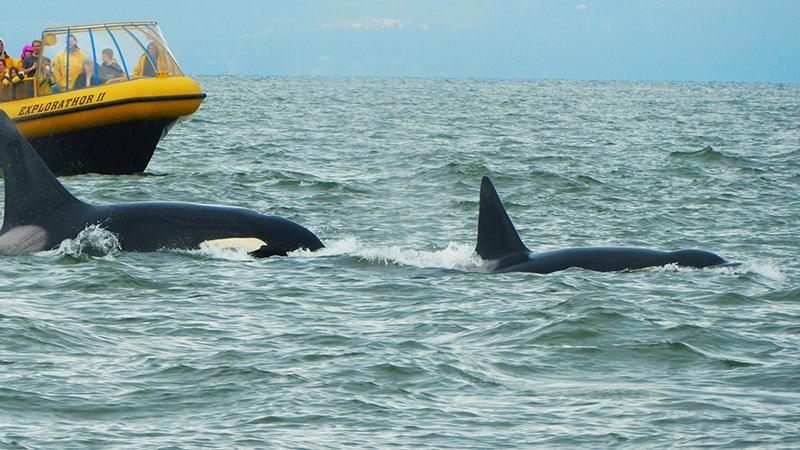 Vista da excursão de observação de baleias em Vancouver